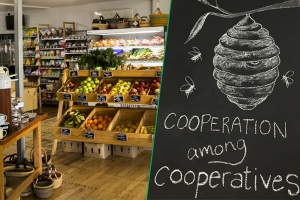 Six Questions from Greencity with Maple Street Coop, Queensland